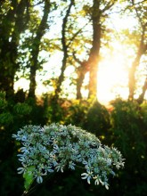 the last flowers hidden in woods