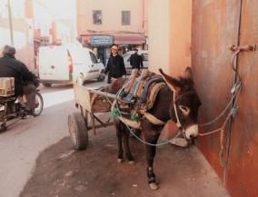 donkey cart 1