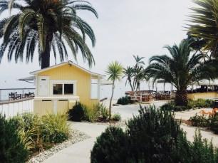 Yellow, Beach, Palms, Resort, Travel, Lifestyle, Explore, Avalon, Catalina Island, Landscape,