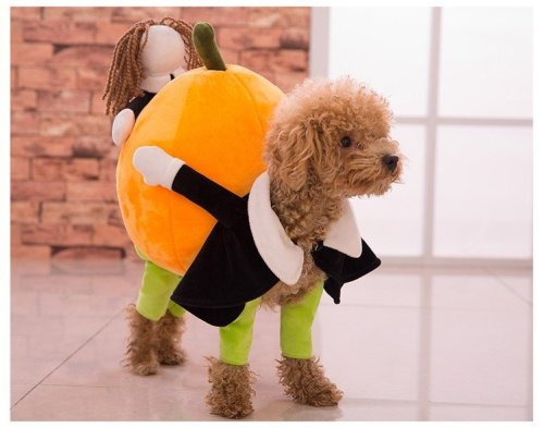 dog-pumpkin-costume