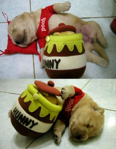winnie-the-pooh-puppy