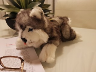 Wolf dog giveaway