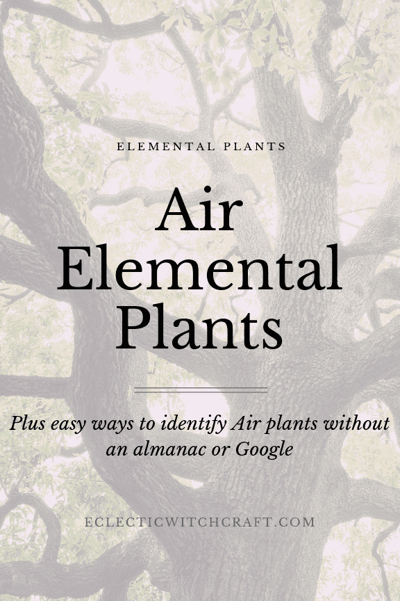 Use these air element plants for witch spells that work. Perfect for witches with air signs zodiac. Air spells magick is easy with these plants and herbs. Spells for communication, spells for travel, and more. Witchcraft made easy for beginners! Learn how to spot air plants in nature without an almanac. List these plants in your book of shadows for future use! Air element zodiac signs love these house plants. Perfect feng shui! #witchcraft #plants #gardening #fengshui