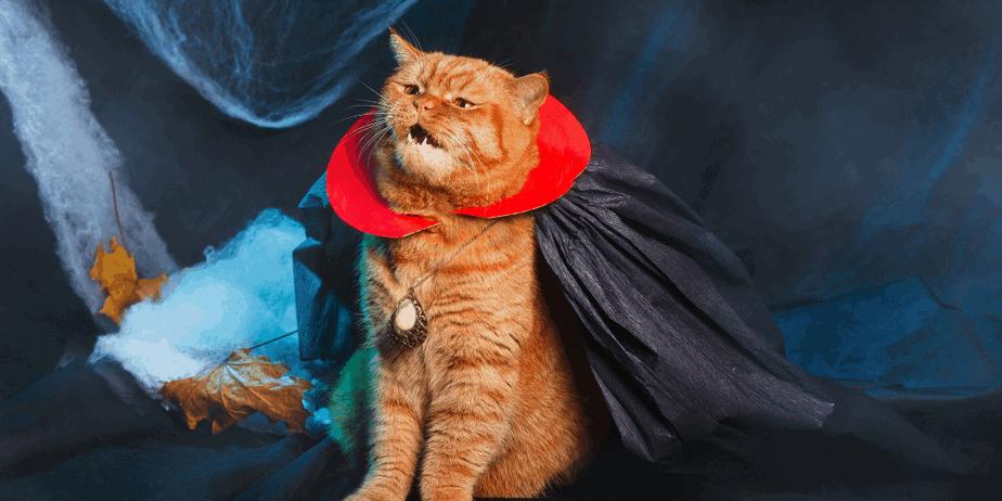 An orange cat wearing a vampire costume