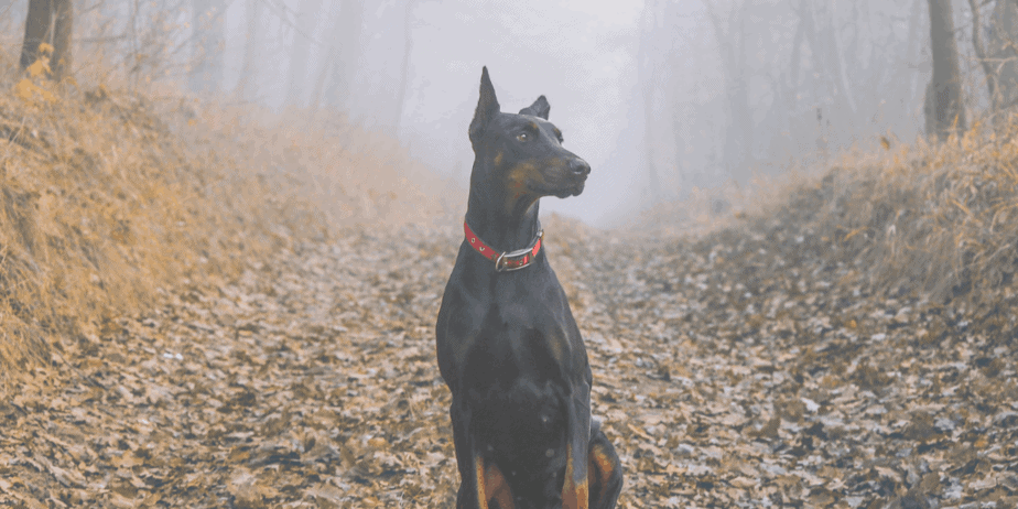 A dog sitting proudly in a foggy forest surrounded by fallen leaves
