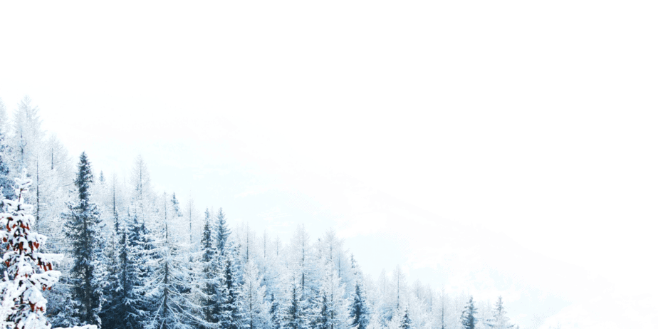 A snowy forest of trees and a white sky