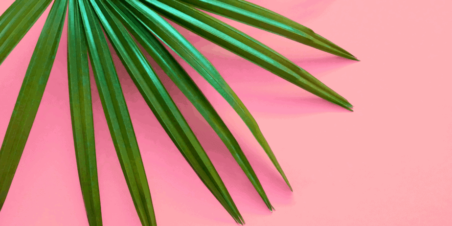 Palm leaf on a pink background