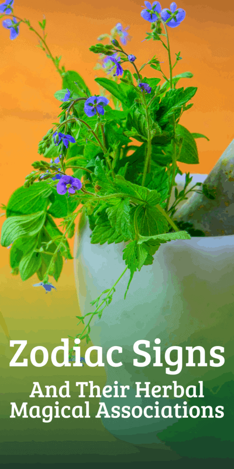 Which herbs are most important to your zodiac sign? Learn about the connection between astrology and herbalism. #astrology #herbalism #zodiac #magic #magick #witch #witchcraft #pagan #wicca