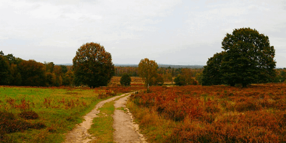 Trees on a beautiful landscape against a gray sky
