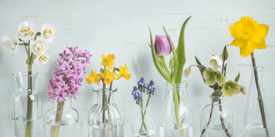 Bulb flowers forced to bloom in jars