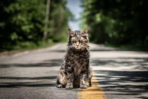 True Horror Featurette: Pet Sematary!