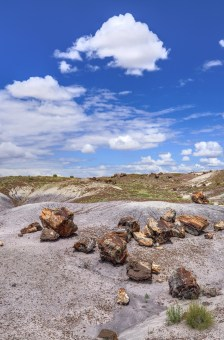Petrified Forest 002