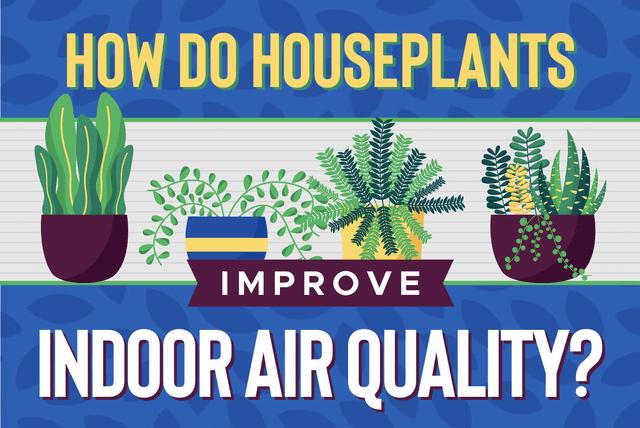 How do houseplants improve indoor air quality