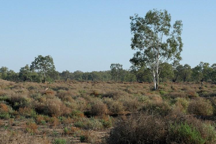 """Chenopod shrubland at """"Burrima"""""""