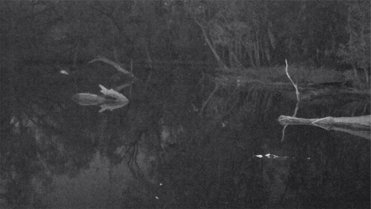 Chalky darkness in the lagoon under the residual super moon at Burrima