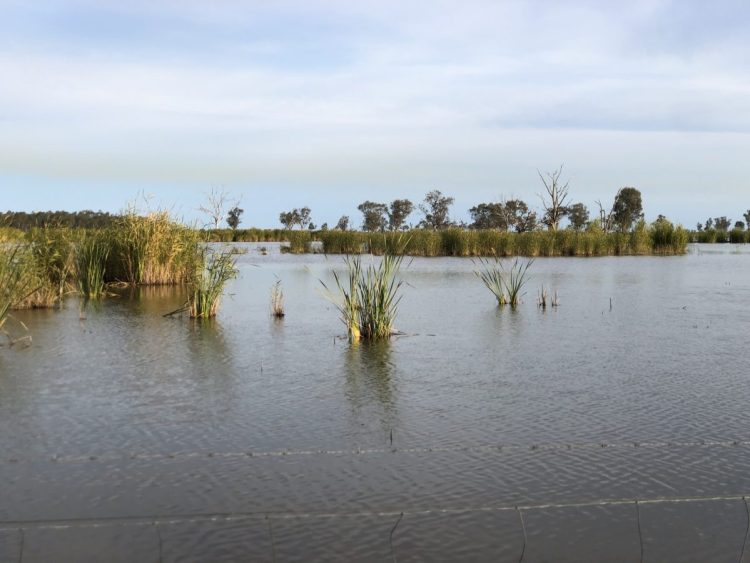Water and reeds on private property