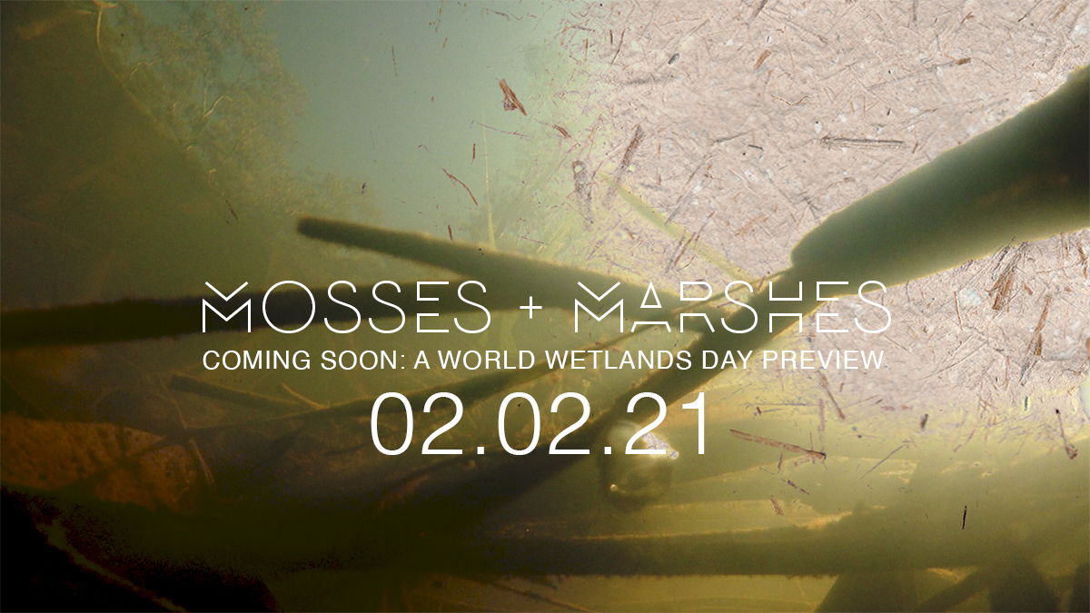Mosses + Marshes preview coming soon