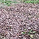 Pokazatelji strukture tla i njeni poboljšivači
