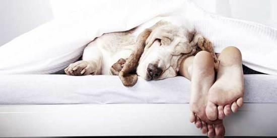 Pas-uspavaćoj-sobi-ili-u-krevetu