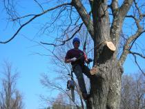 Josh Chretien pruning.