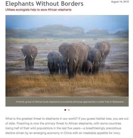 Elephant without Borders