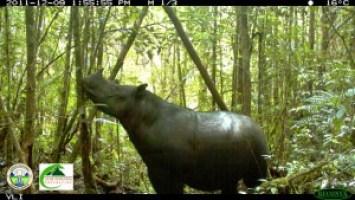 rhino best image