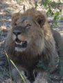 """""""Lions are Approaching! Early Lessons From Our Early-Warning System for Protecting Livestock and Lions"""" – Andrew Stein, Adjunct Faculty"""
