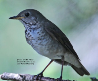 Bill Deluca Discusses Bird Population Study and Climate Change on NEPR