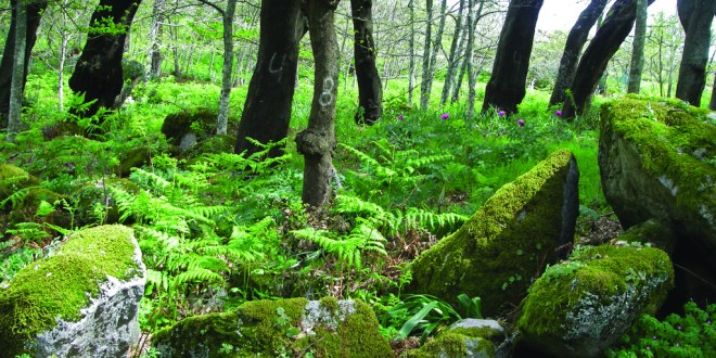 floresta autoctone