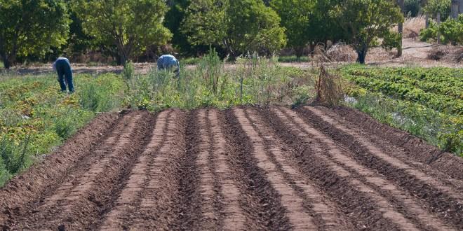biologische Landwirtschaft der Algarve