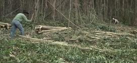 Holzfäller in Monchique