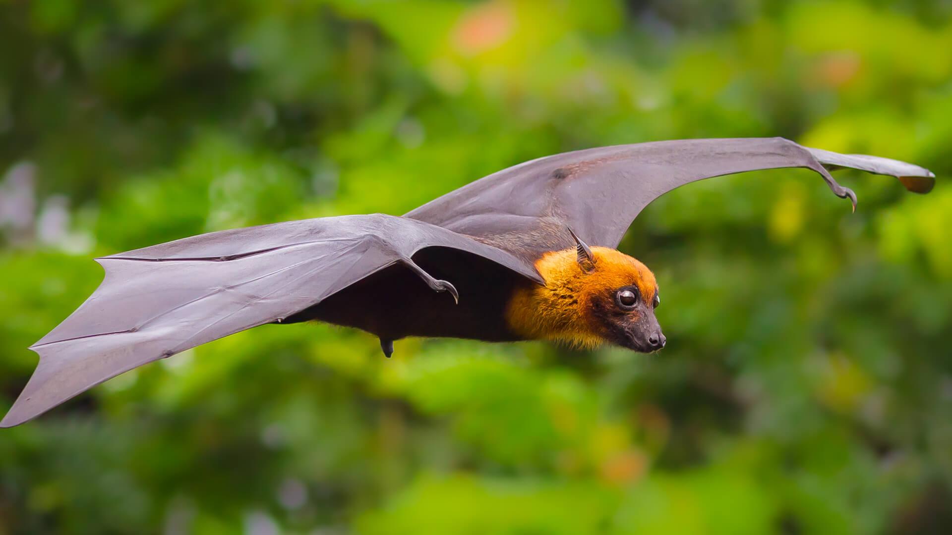 Sem Morcegos Sem Tequila Estes E Outros Exemplos De Sua
