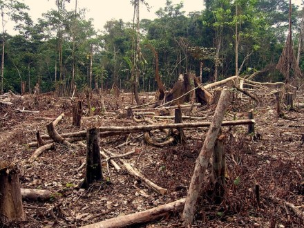 Deforestation_in_the_amazon-662x0_q100_crop-scale
