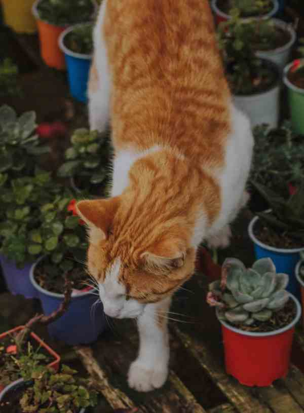 Houseplants That Are Safe for My Cat