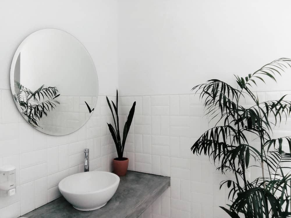 Best Indoor Bathroom Plants to Reduce Humidity (25 Plants ...