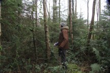Tree marking - selecting removal of trees to let others grow. These conifers are almost 25 years but are like bonsai as they have been shaded by Alder