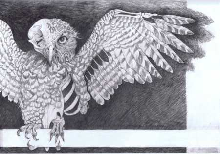 Slow Wing Owl, with permission Ilka Blue