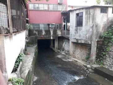 Plum Tree Creek 1