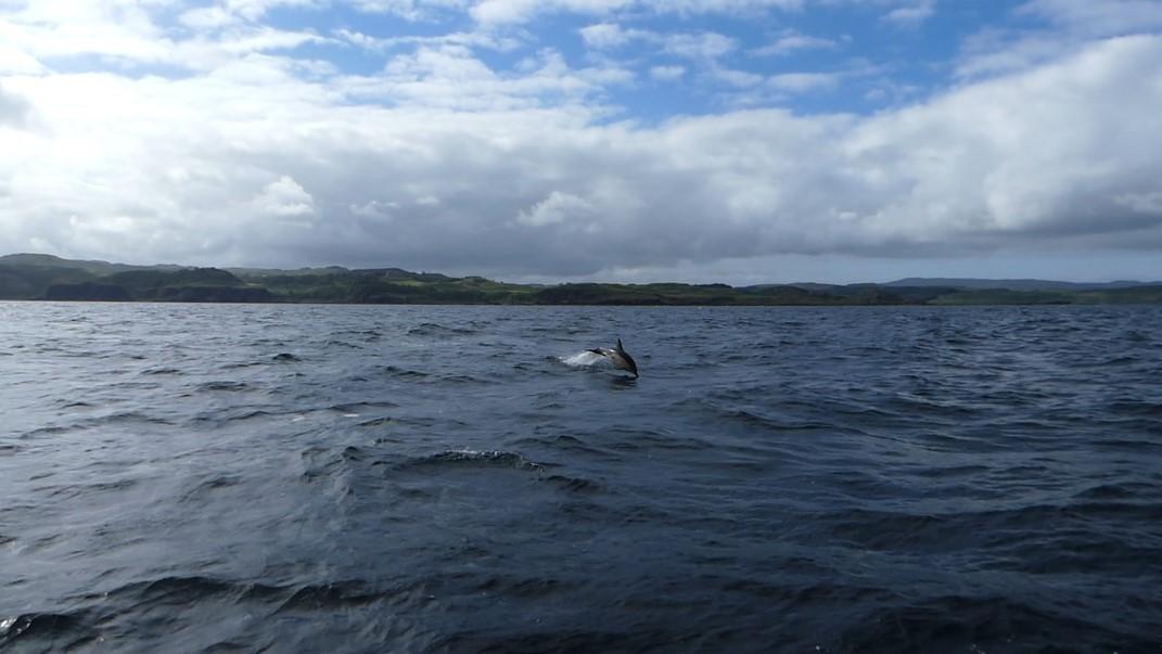 Semaine nationale de l'observation des baleines et des dauphins au Royaume Uni