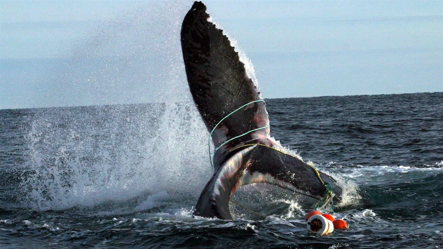 S.E.A: Travailler avec les pêcheurs pour la protection des cétacés.