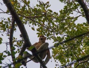 Bako National Park in Borneo