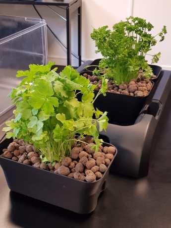ecogarden indoor herb garden