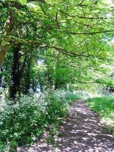 Dappled light path walk - Shilton