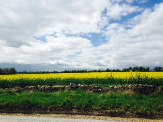 The Cotswold vibrant countryside