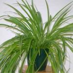 non-toxic-plants.jpg