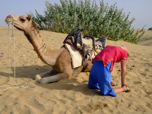 Camel Pose with Camel