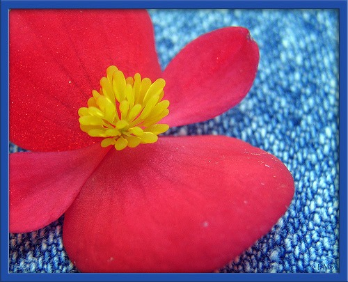 blue jeans with flower