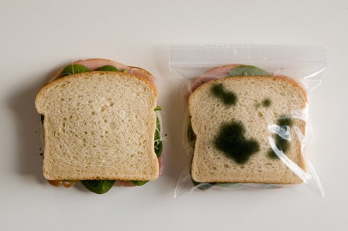 fake mold protects your child\'s lunch from bullies