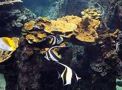 12-year-old boy works to save Hawaiian reef