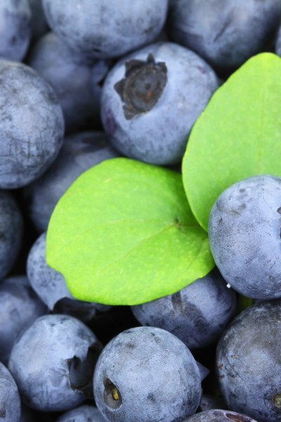 Organic, Vegan Blueberry Oat Muffins